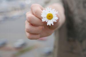 840446_a_daisy.jpg