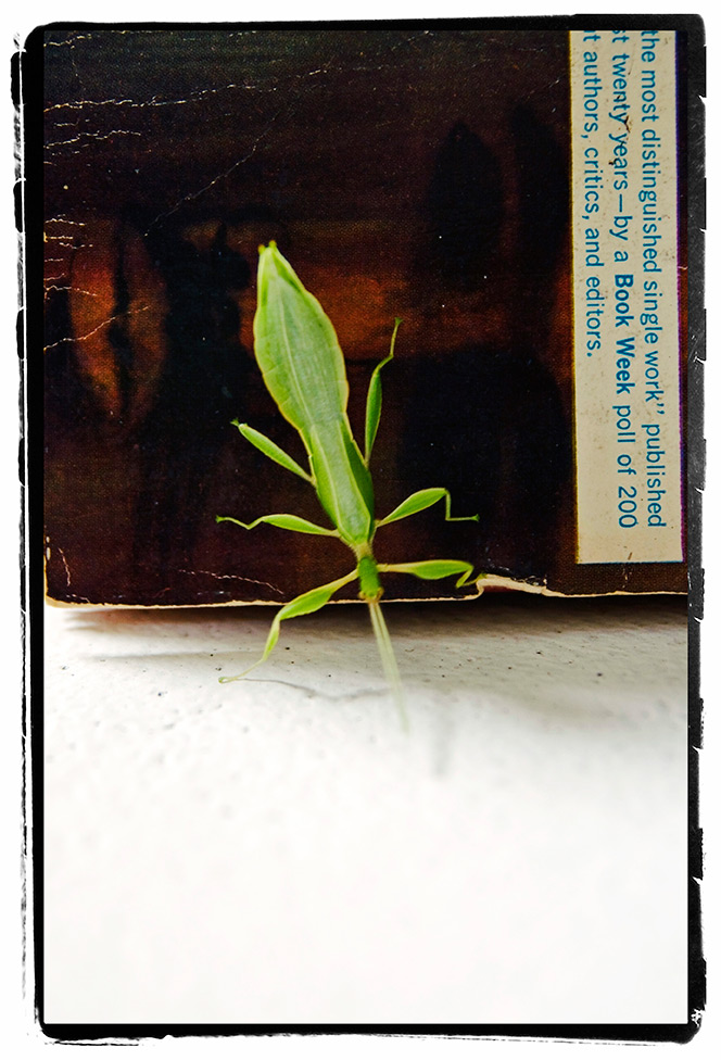 leafinsect01